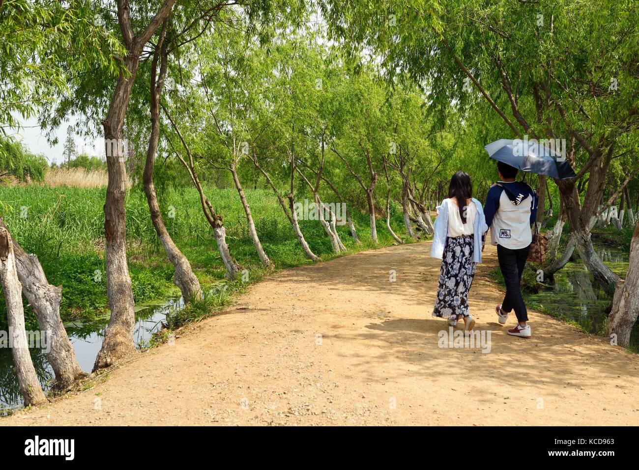 Laoyu River Wetland Park lake ecology rehabilitation conservation tree planting. Part of large scale Dianchi Lake - Stock Image