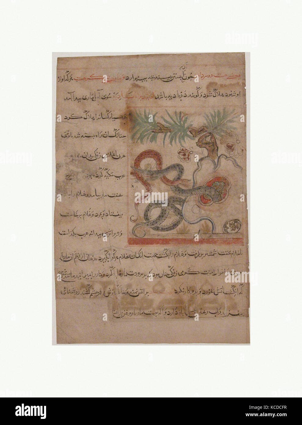 'Pair of Serpents', Folio from a Manafi' al-Hayawan (On the Usefulness of Animals) of Ibn Bakhtishu', - Stock Image