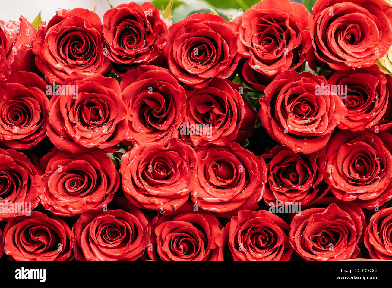Beautiful red roses water drops stock photos beautiful red roses bouquet of beautiful red roses with drops of water stock image izmirmasajfo