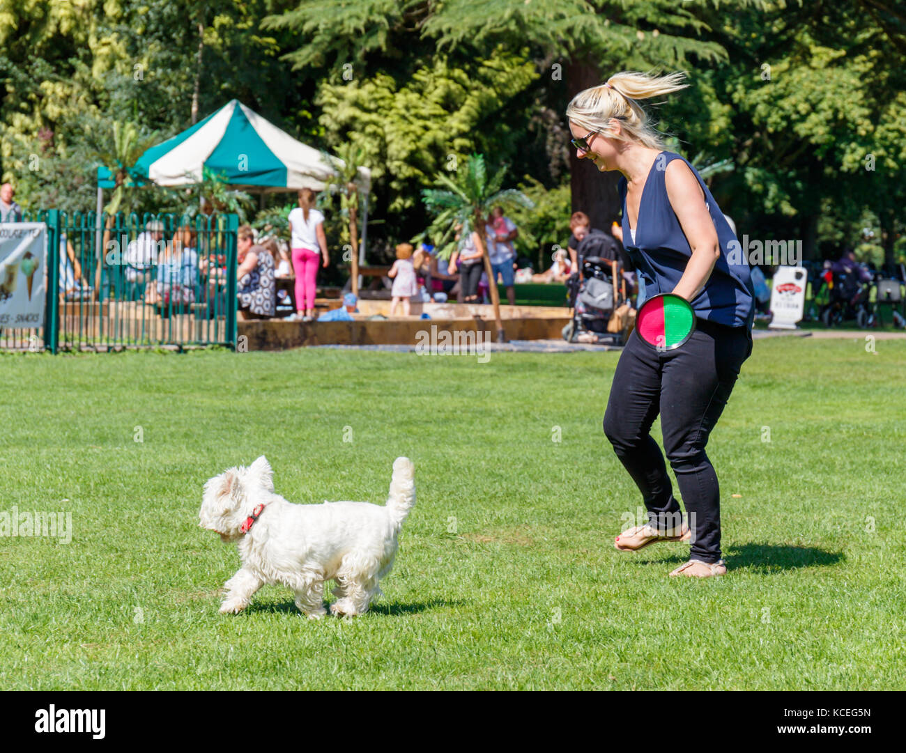 West Highland Terrier Playing Stock Photos & West Highland Terrier