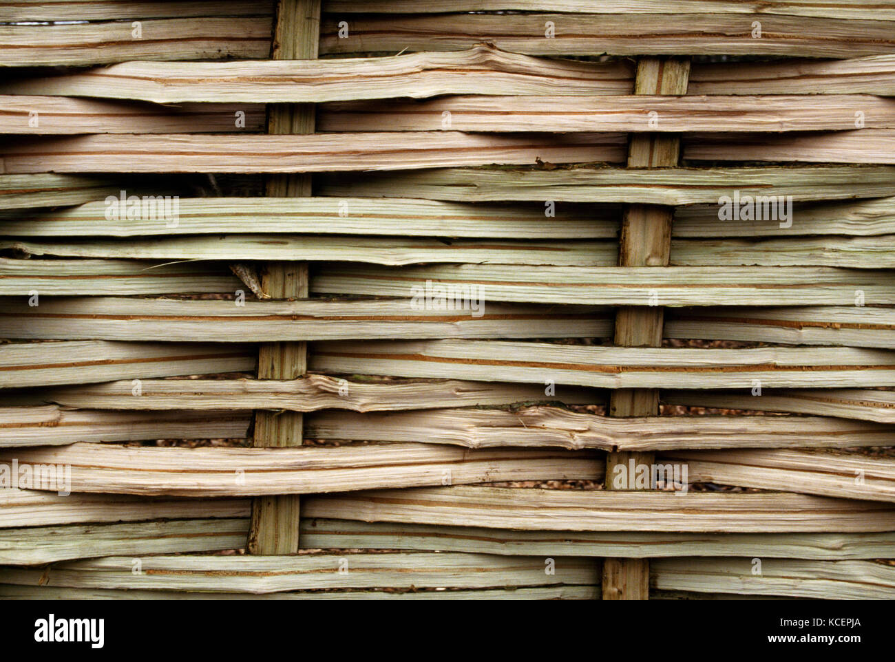 Detail of the weave of a freshly made Hazel hurdle. Showing split sails (uprights) and weavers (horizontal). - Stock Image
