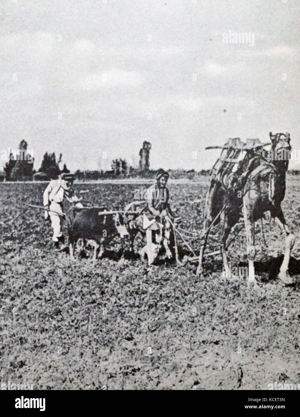Late 19th century Jewish Farm in the Central District of Israel circa 1885 - Stock Image