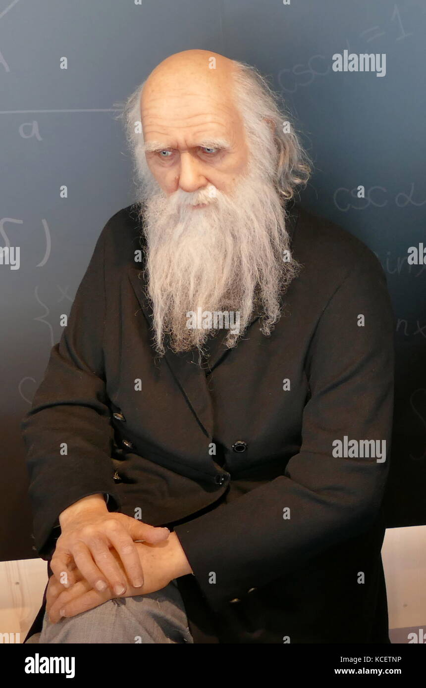 Wax sculpture (waxwork) of Charles Darwin, (1809 – 1882), an English naturalist and geologist, known for his contributions - Stock Image