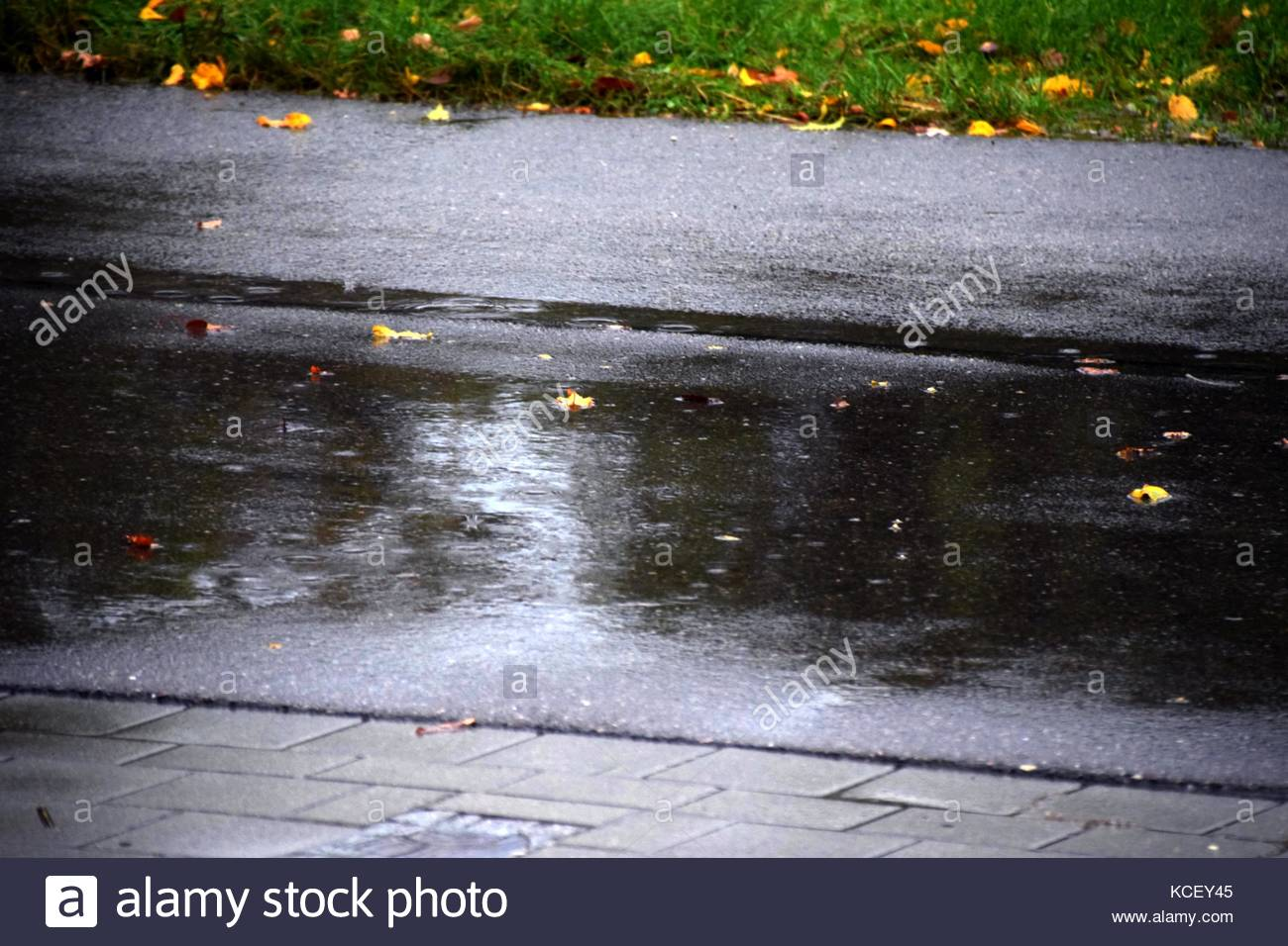 heavy rain on a road in autumn with fallen colorful leaves, water is on the road - Stock Image