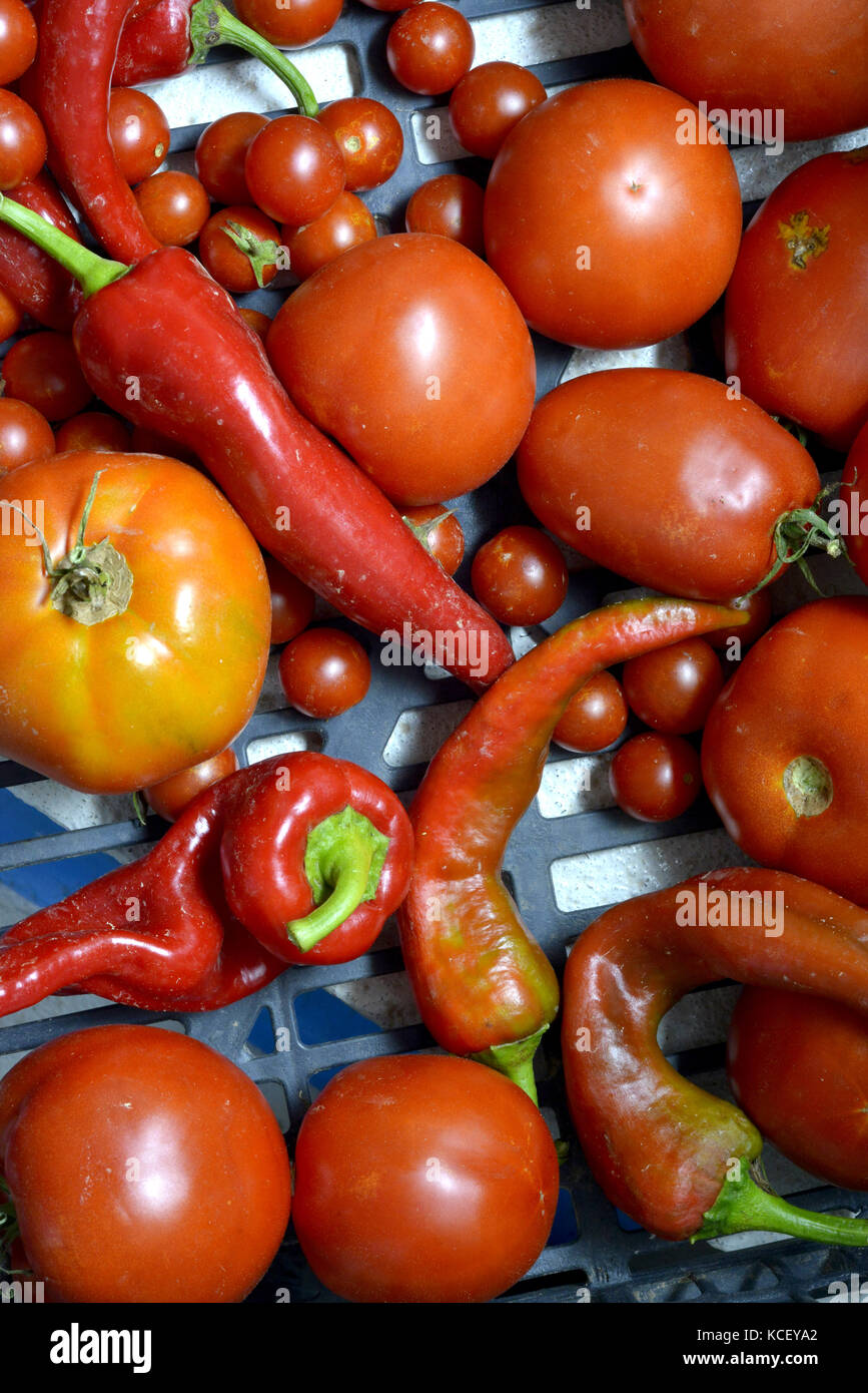 fresh vegetables , just harvested organic red pepper and tomato - Stock Image