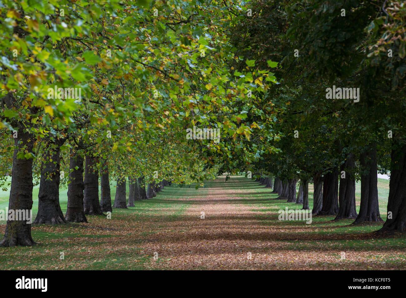 Windsor, UK. 4th October , 2017. Autumn colours alongside the Long Walk in Windsor Great Park. Credit: Mark Kerrison/Alamy Stock Photo