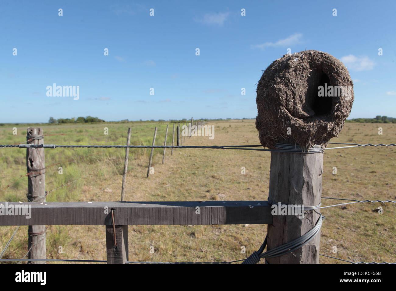 Nest of birds, trunk, fence, 2011, Uruguay - Stock Image