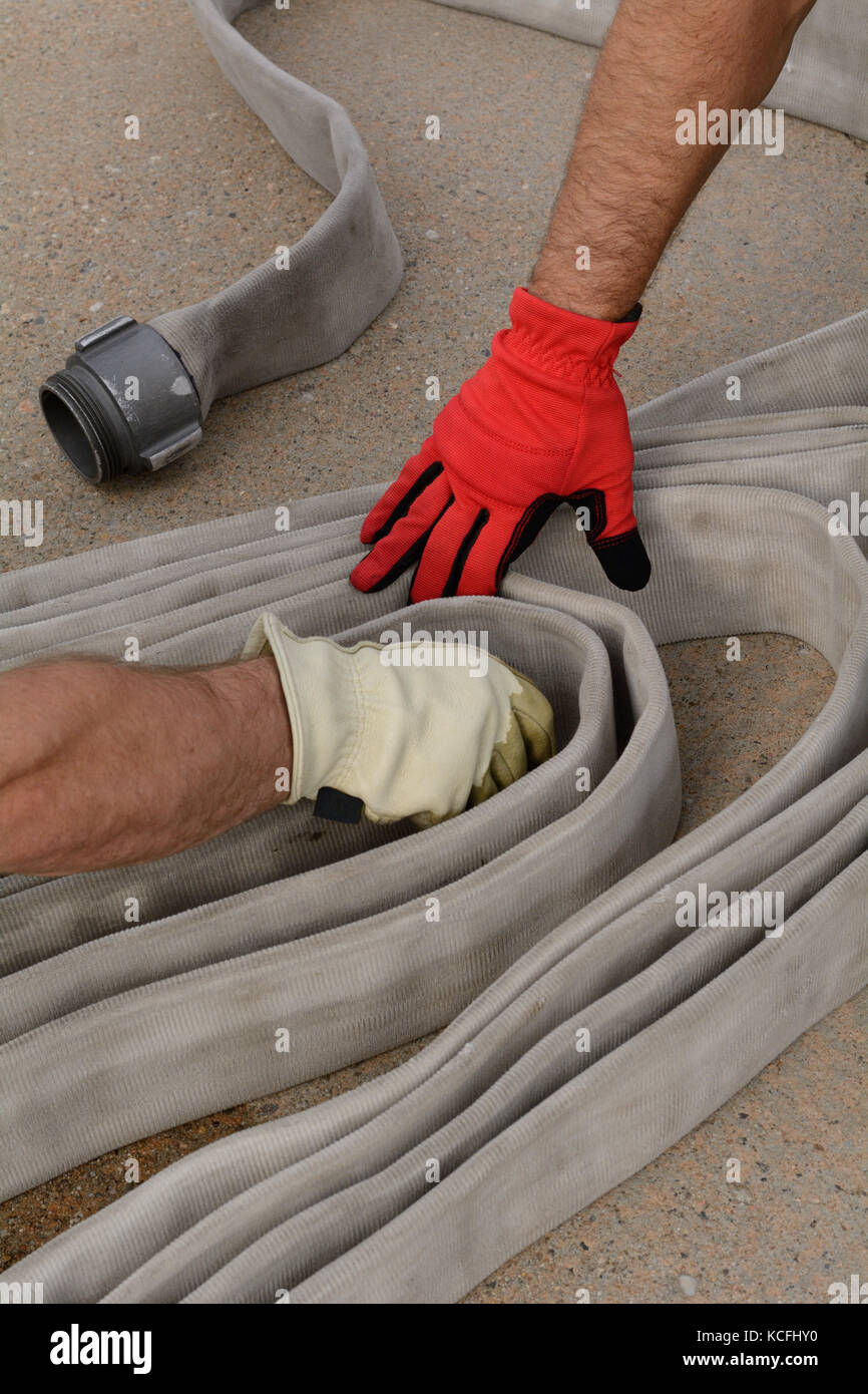 Firemen hands working together as team to roll up fire hose after yearly fire hose test and inspection - Stock Image