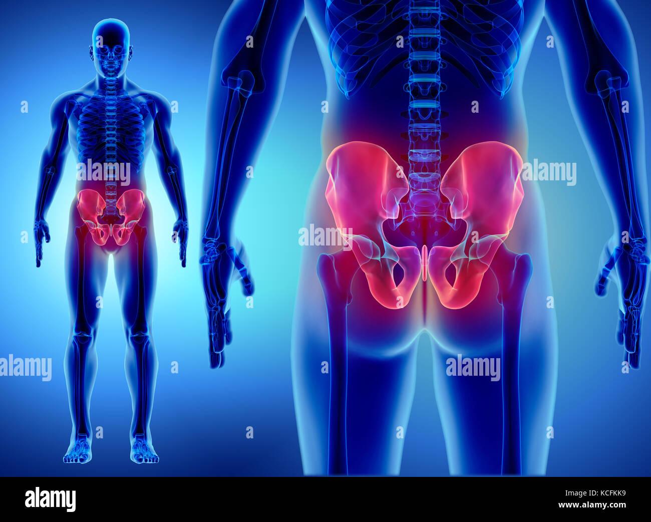 3D illustration of Hip Skeleton, medical concept Stock Photo ...