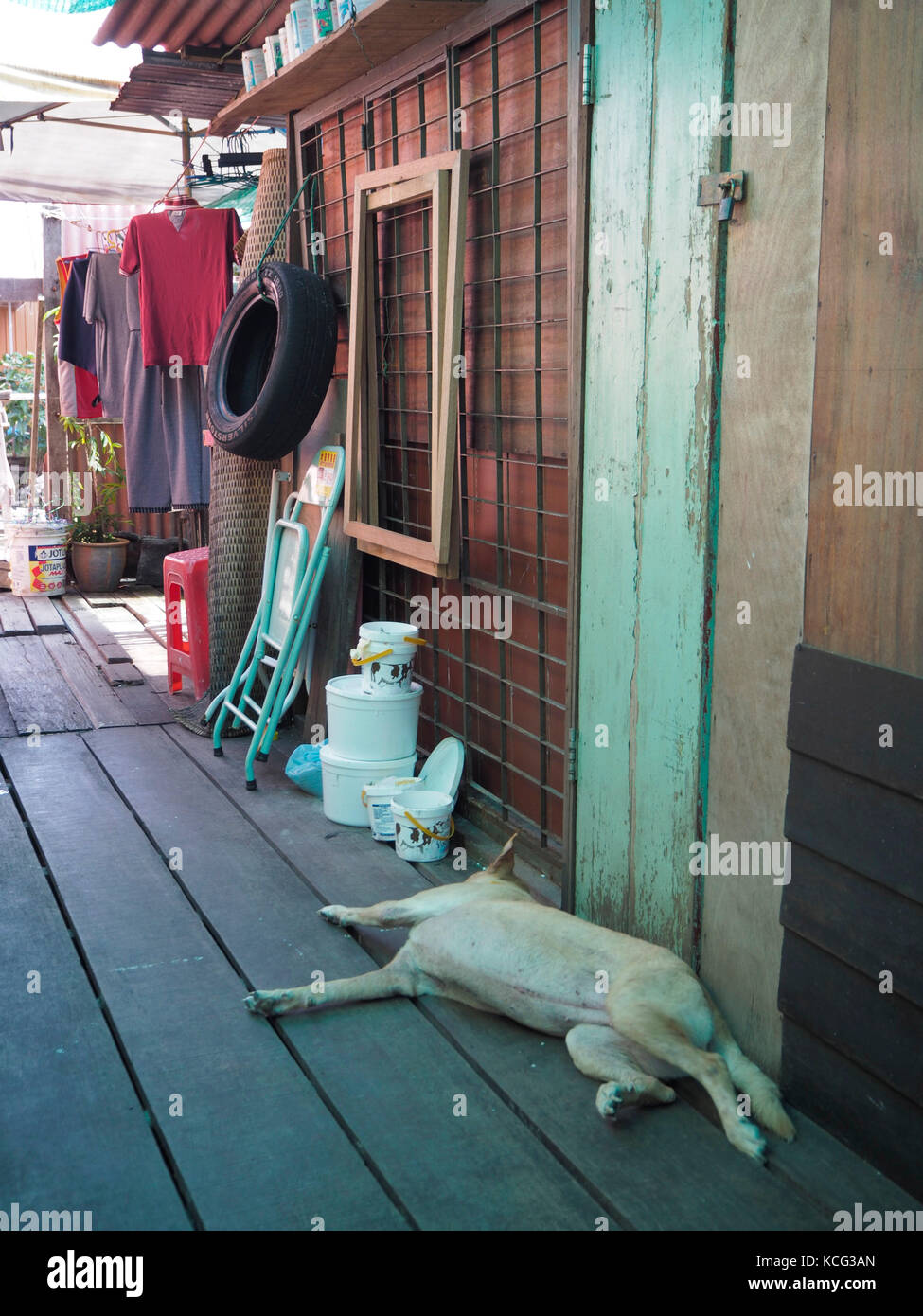 A dog sleeping at Chew Jetty in Penang, Malaysia. - Stock Image