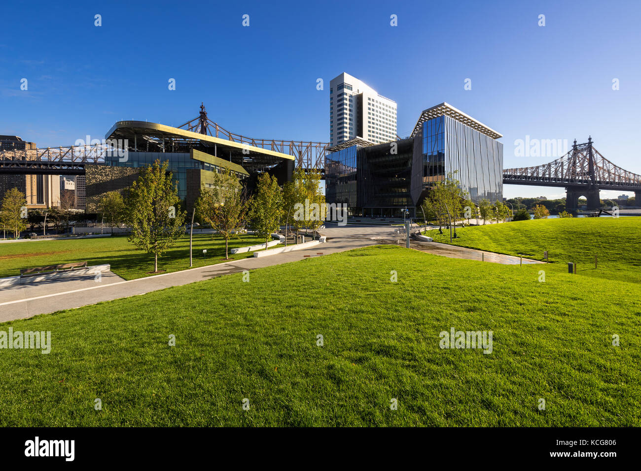 The Cornell Tech campus on Roosevelt Island in summer. New York City - Stock Image