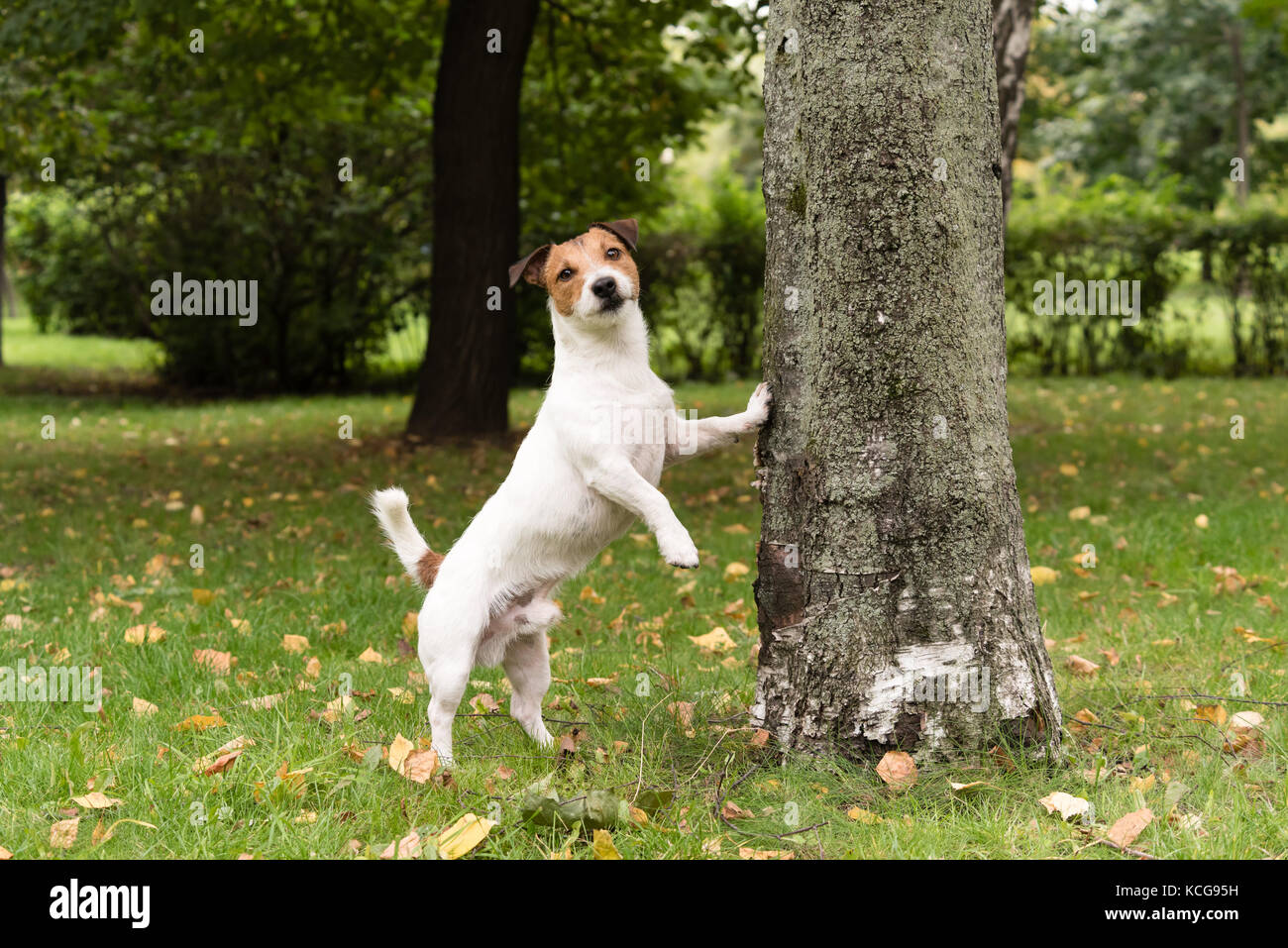Cute dog at autumn park leaning on tree - Stock Image