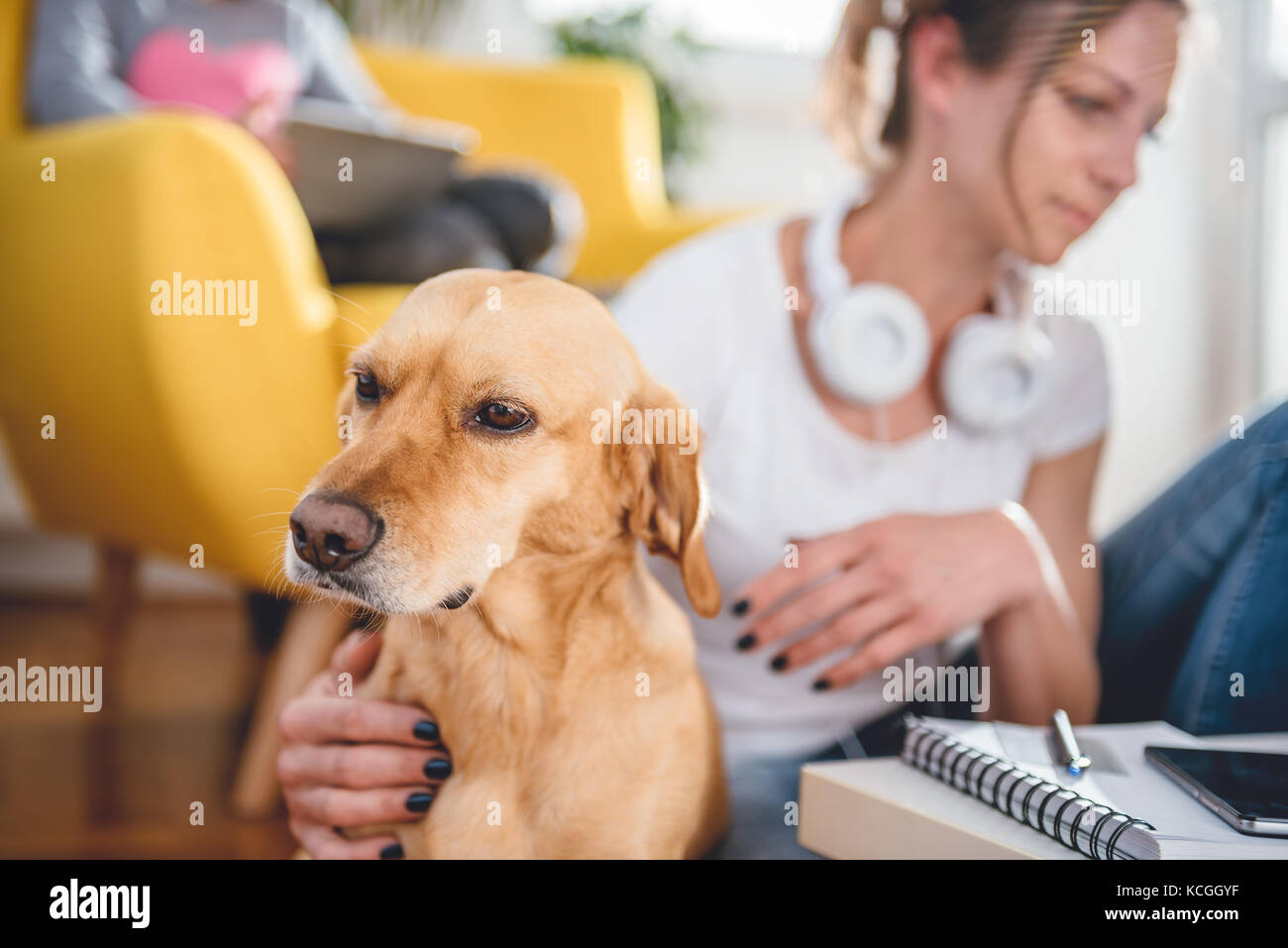 Small yellow dog sitting on the floor by the woman who is petting him at home - Stock Image