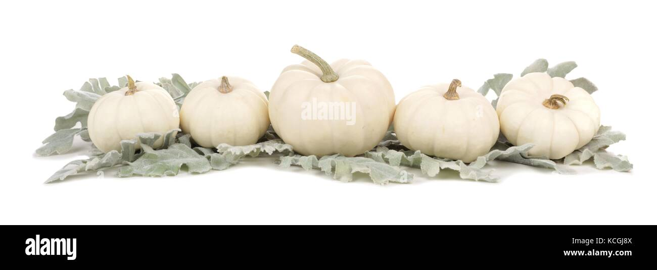 Autumn border arrangement of white pumpkins and silver leaves isolated on a white background - Stock Image