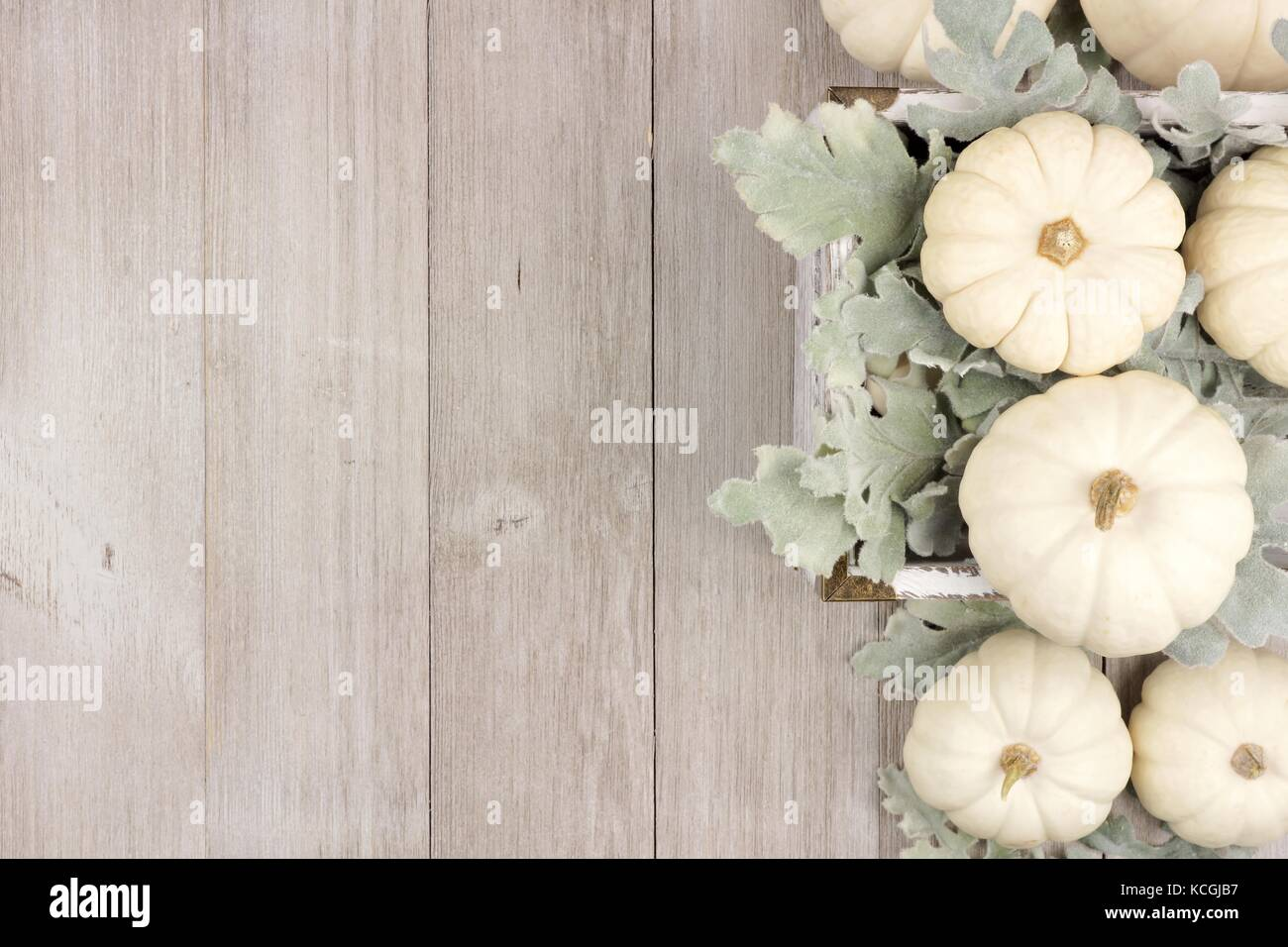 Autumn Side Border Of White Pumpkins And Silver Leaves Over A Rustic Light Gray Wood Background