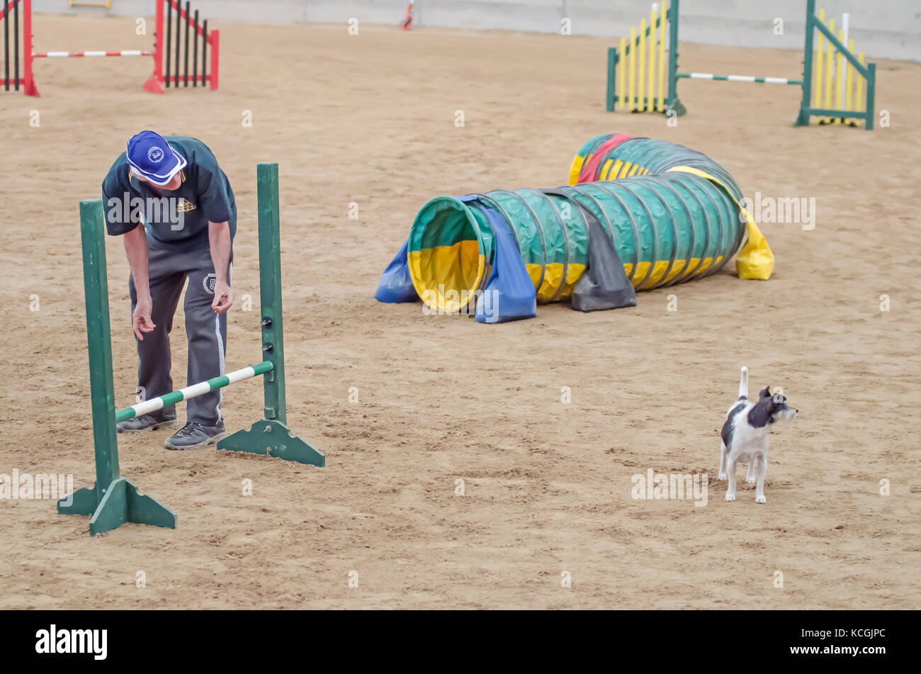 A disobedient dog during ability trials at  Agility Dog Association of Australia National Grand Prix. Tamworth, - Stock Image
