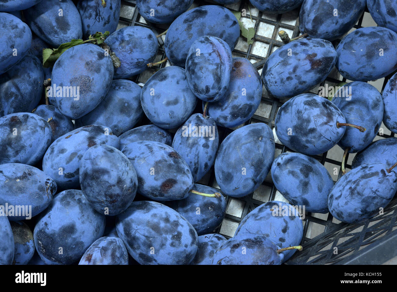 Fresh Ripe Plums or Blackthorns , top view of juicy natural plums with , high quality resolution image - Stock Image