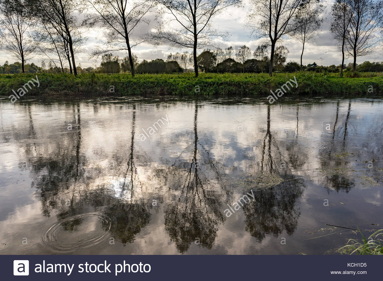 A line of trees on a riverbank reflected in the river water, Avon, Hampshire, UK - Stock Image