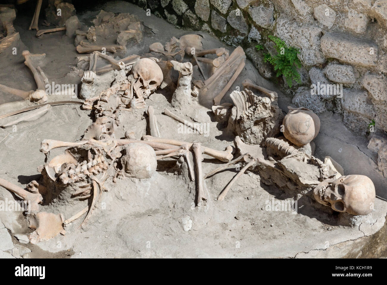 Replica skeletons of people killed instantly in the AD 79 eruption of Mt Vesuvius, Herculaneum (Ercolano) Naples, - Stock Image