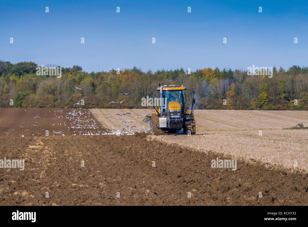 Caterpillar Tractor ploughing on bright Autumn day - Stock Image