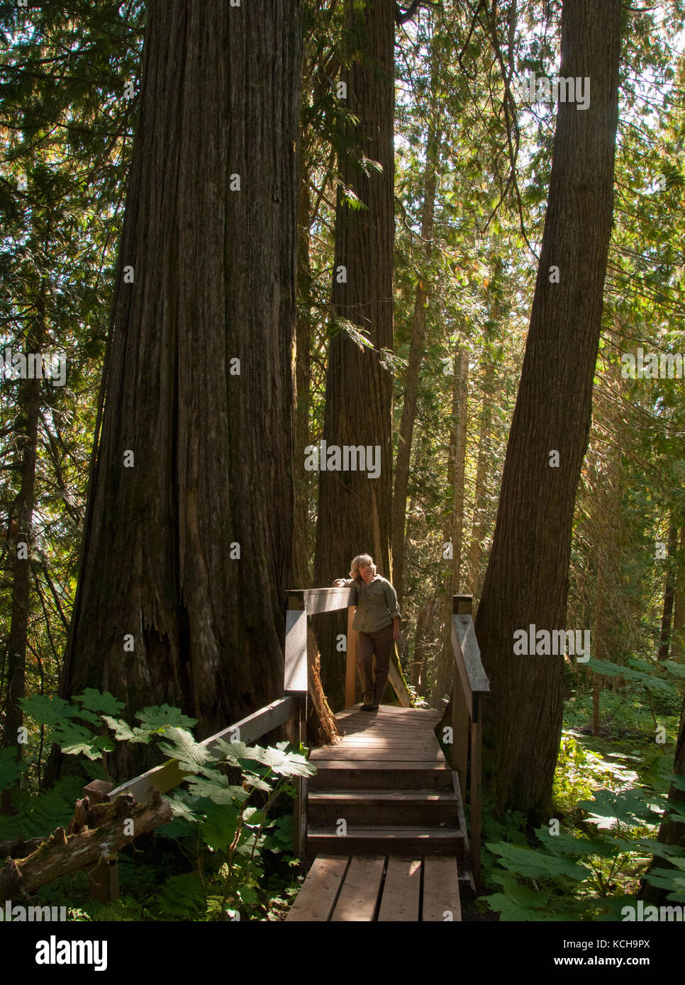 Woman walking on trail at The Ancient Forest Trail outside Prince George, BC, Canada. Inland Rain Forest, Western - Stock Image