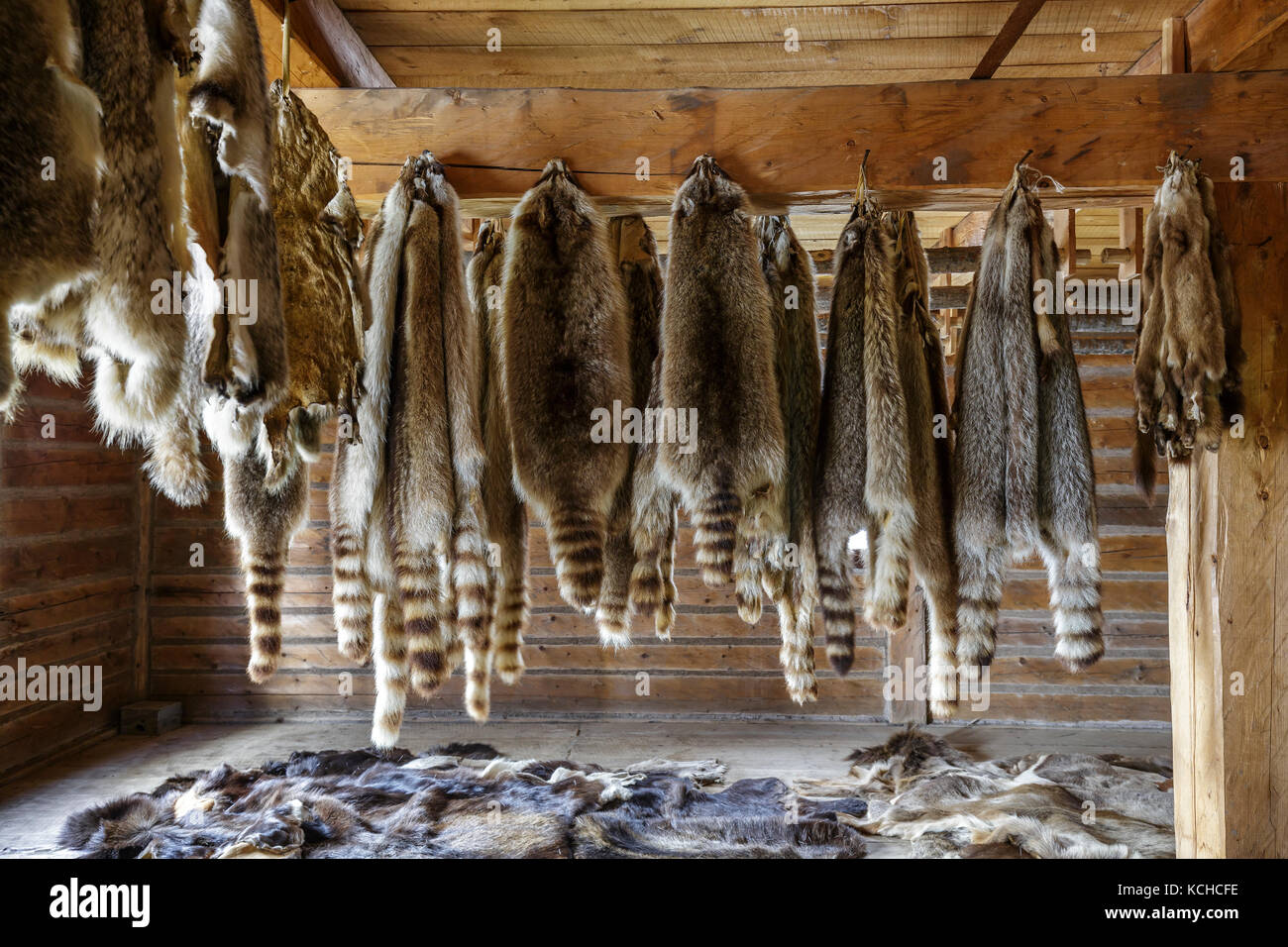 Raccoon fur pelts, Fort William Historical Park, Thunder Bay, Ontario, Canada. Stock Photo