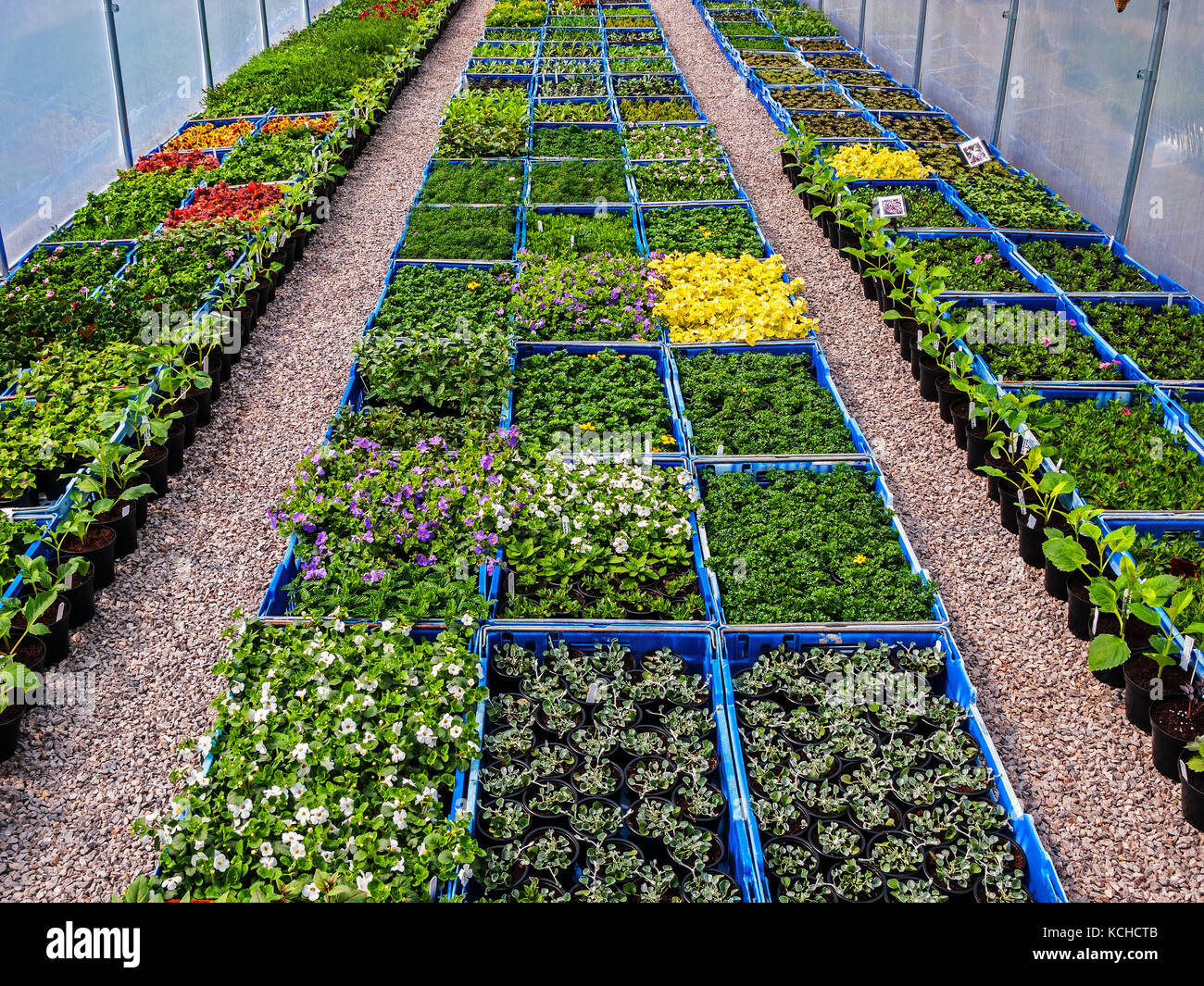 Nursery Commercial Polytunnel - Stock Image