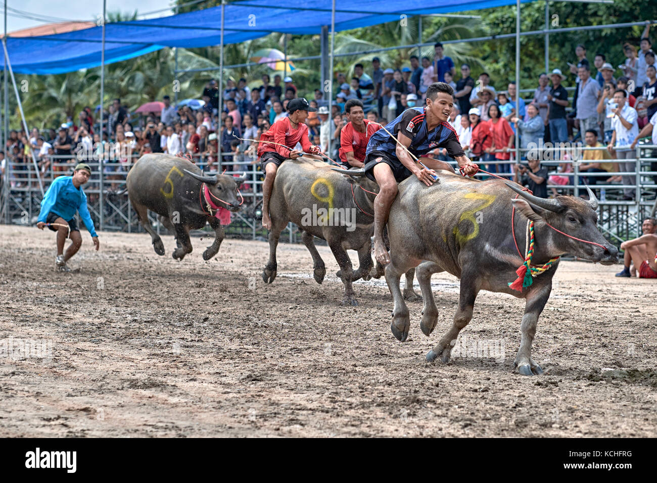 Buffalo racing, Unusual sport, Thailand, Southeast Asia. Asian sporting event. - Stock Image