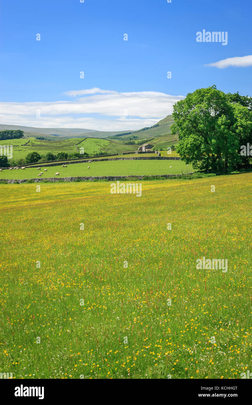 Wensleydale countryside North Yorkshire England Stock Photo