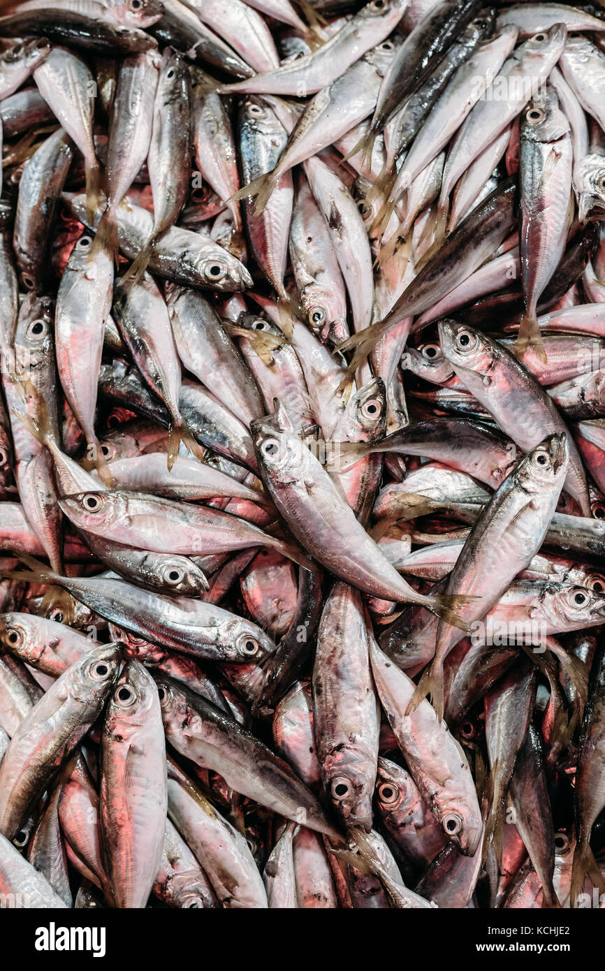 Fresh European Anchovy Fish On Display On Ice On Fishermen Market Store Shop. Seafood Fish Background. European - Stock Image