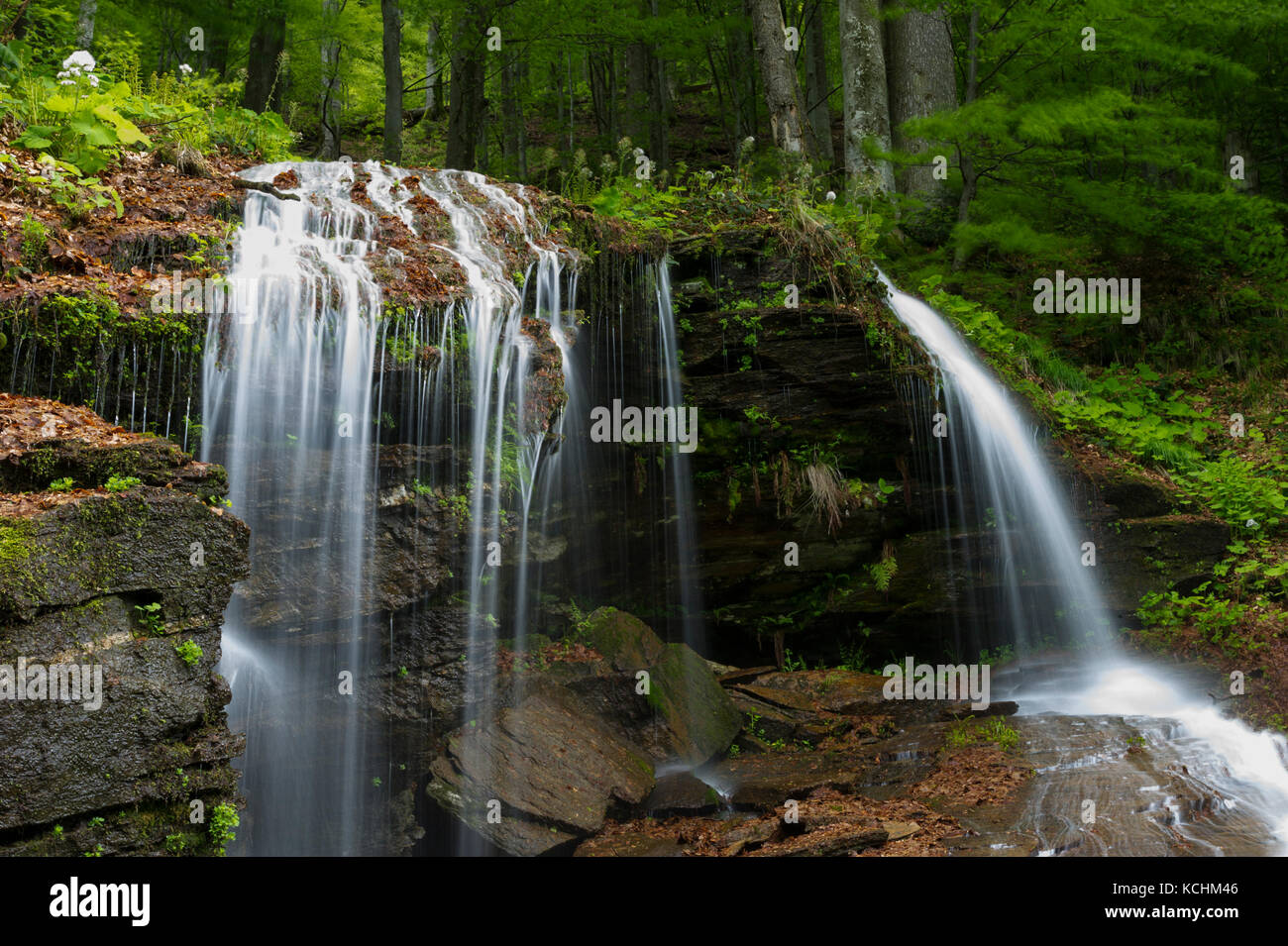 Domogled National Park / Romania - Waterfall in the vast primeval forest in Iauna Craiove UNESCO World Nature Heritage - Stock Image