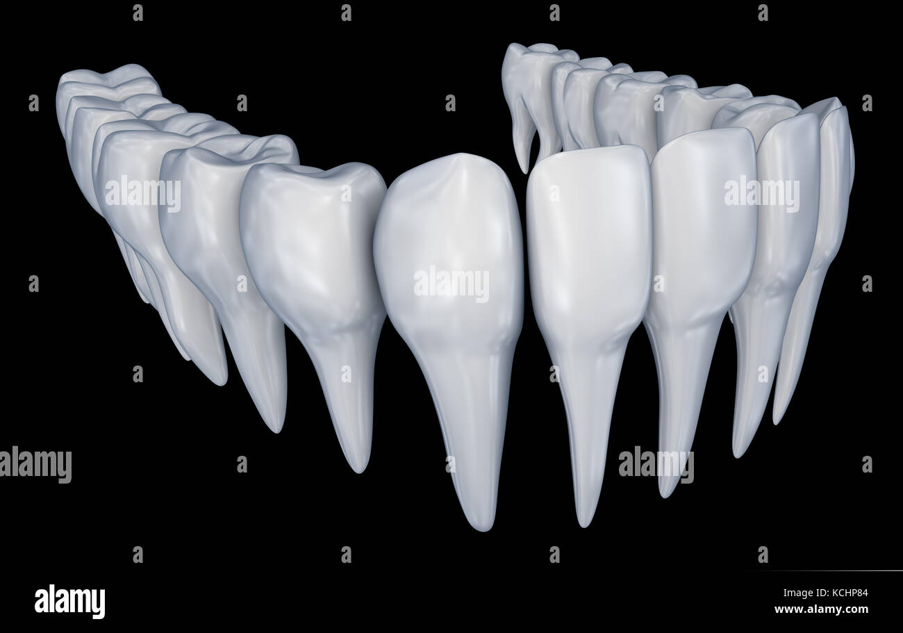 Human Teeth And 3d Stock Photos & Human Teeth And 3d Stock Images ...