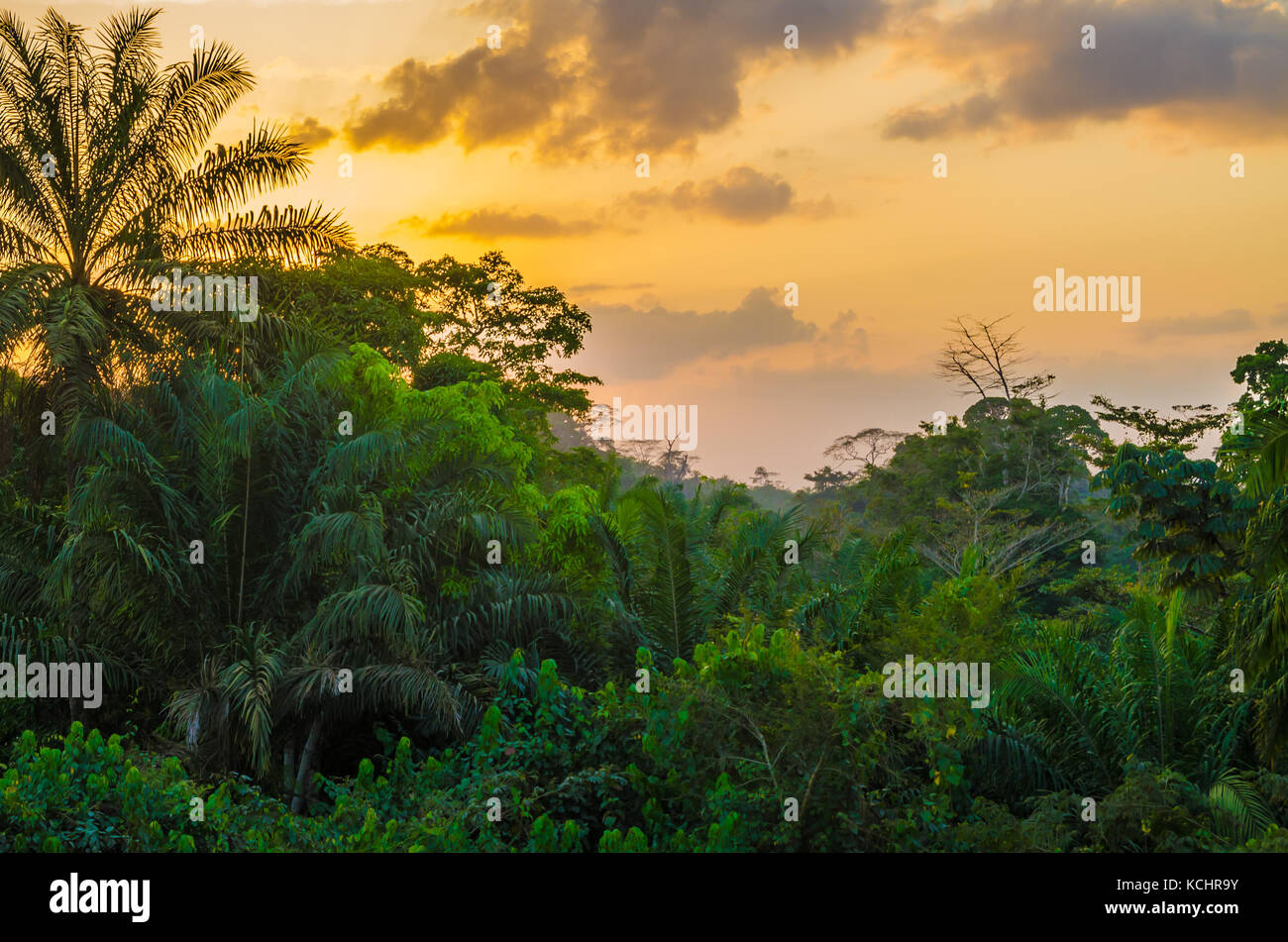 Beautiful lush green West African rain forest during amazing sunset, Liberia, West Africa - Stock Image