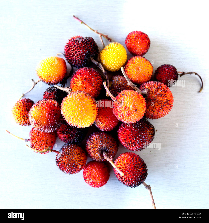 Native Edible Plants Australia: Edible Red Berries Of The Arbutus Tree Or Shrub, Native To