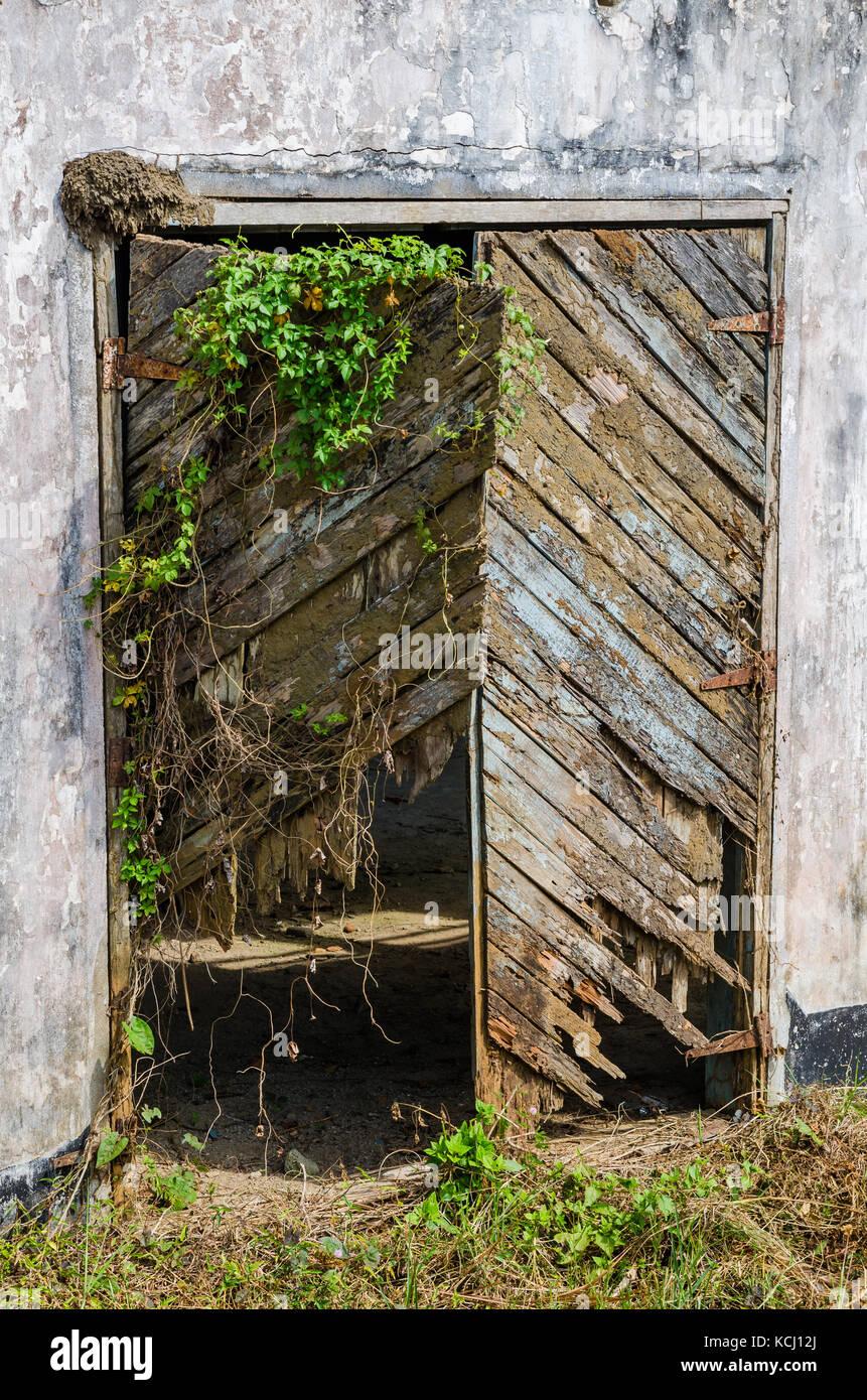 Broken and overgrown wooden door in concrete wall, Robertsport, Liberia, West Africa - Stock Image