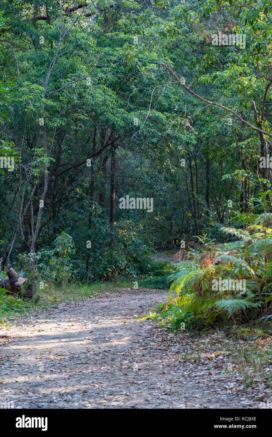 A fire trail in Sydney bush land - Stock Image