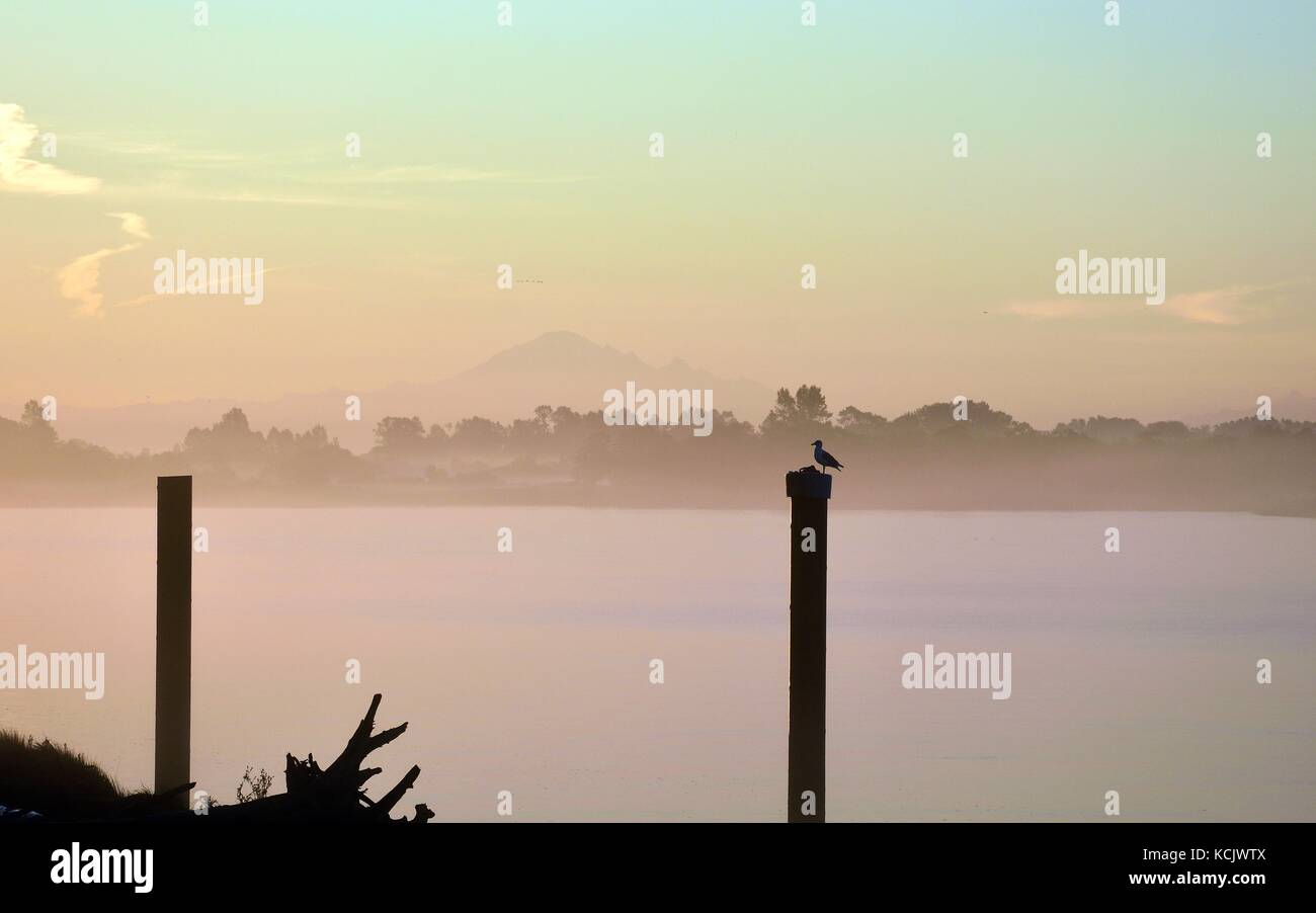 An early bird is waiting for upcoming sunrising - Stock Image