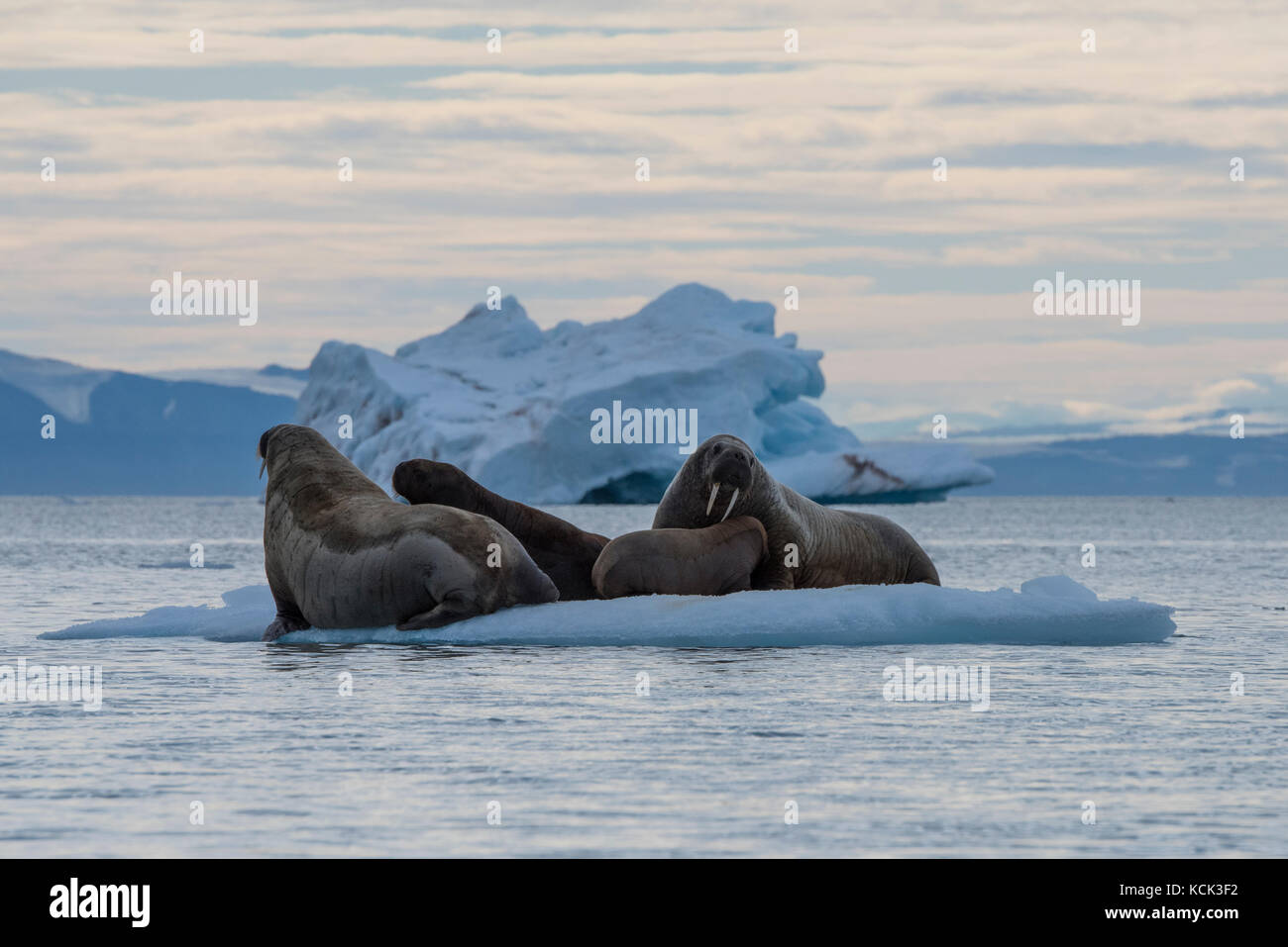 Norway, Svalbard, Nordaustlandet, Nordaust-Svalbard Nature Reserve, Austfonna Ice Cap. Brasvellbreen glacier, the Stock Photo