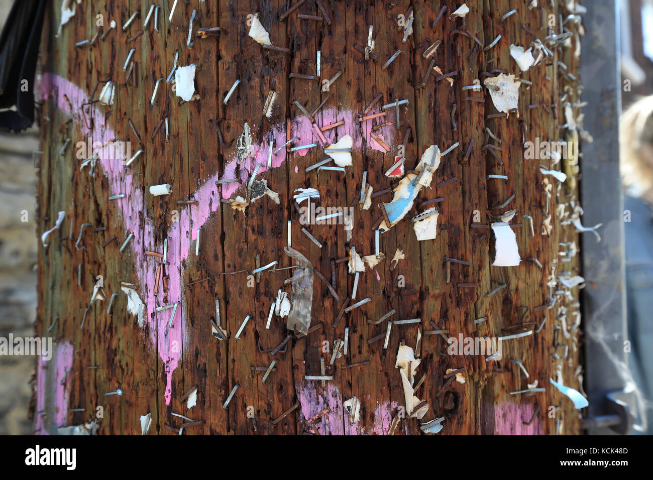 leftover staples from flyers in utility pole - Stock Image