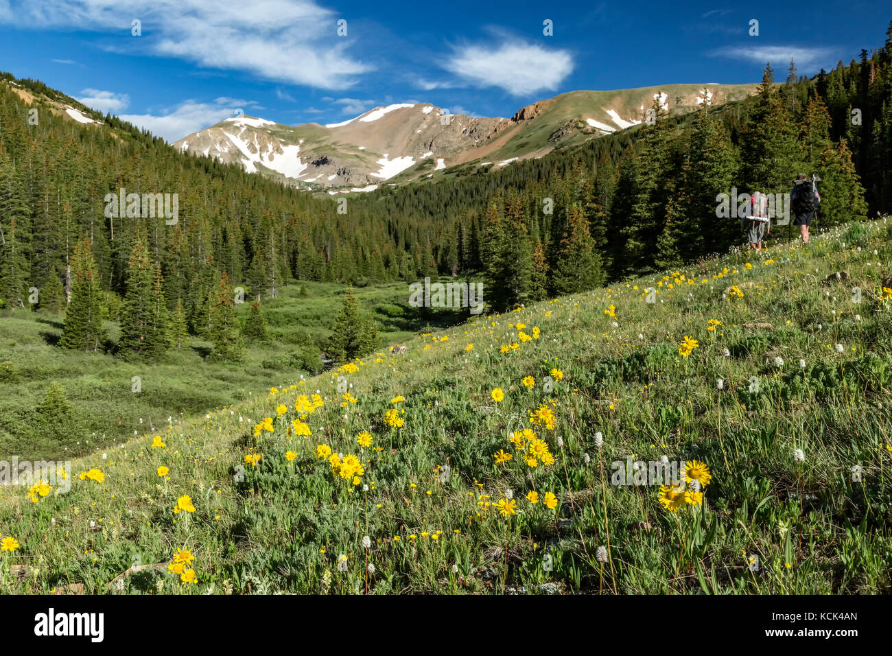Hikers, wildflowers and mountains, Herman Gulch Trail, Arapaho National Forest, Colorado USA - Stock Image