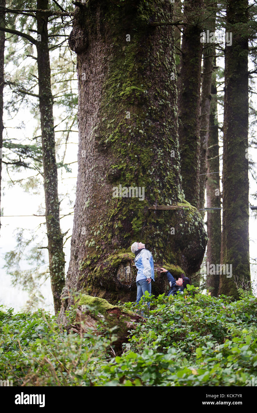 Two hikers look up at a large Sitka Spruce tree (Picea sitchensis) near Kyuquot on the west coast of Vancouver Island, - Stock Image