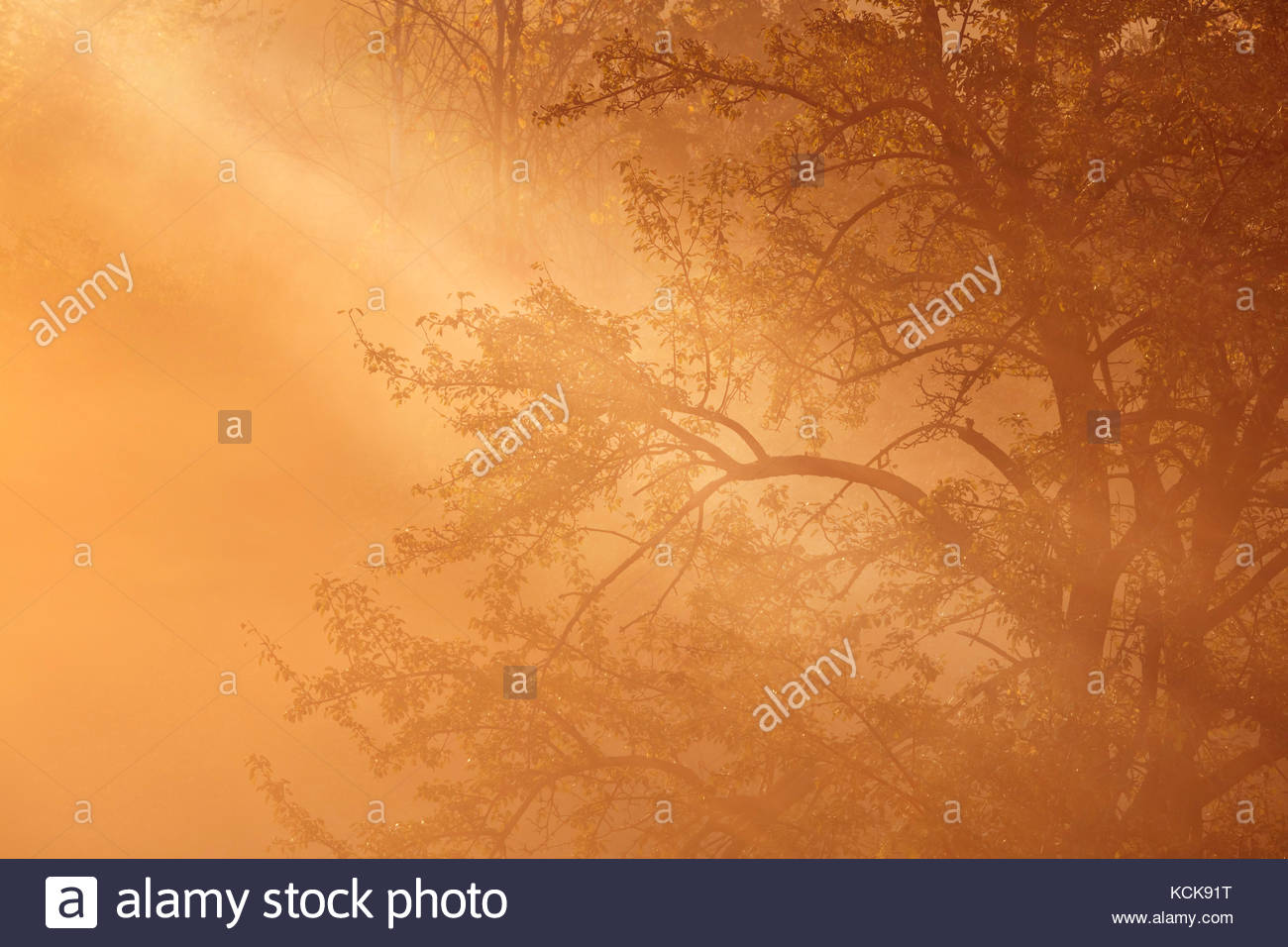 Light beam through radiation fog and misty trees in early morning in Whitby Ontario Canada Stock Photo