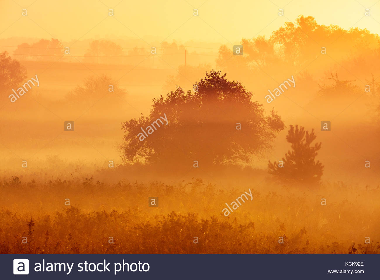 Radiation fog and misty trees in early morning in Whitby Ontario Canada Stock Photo