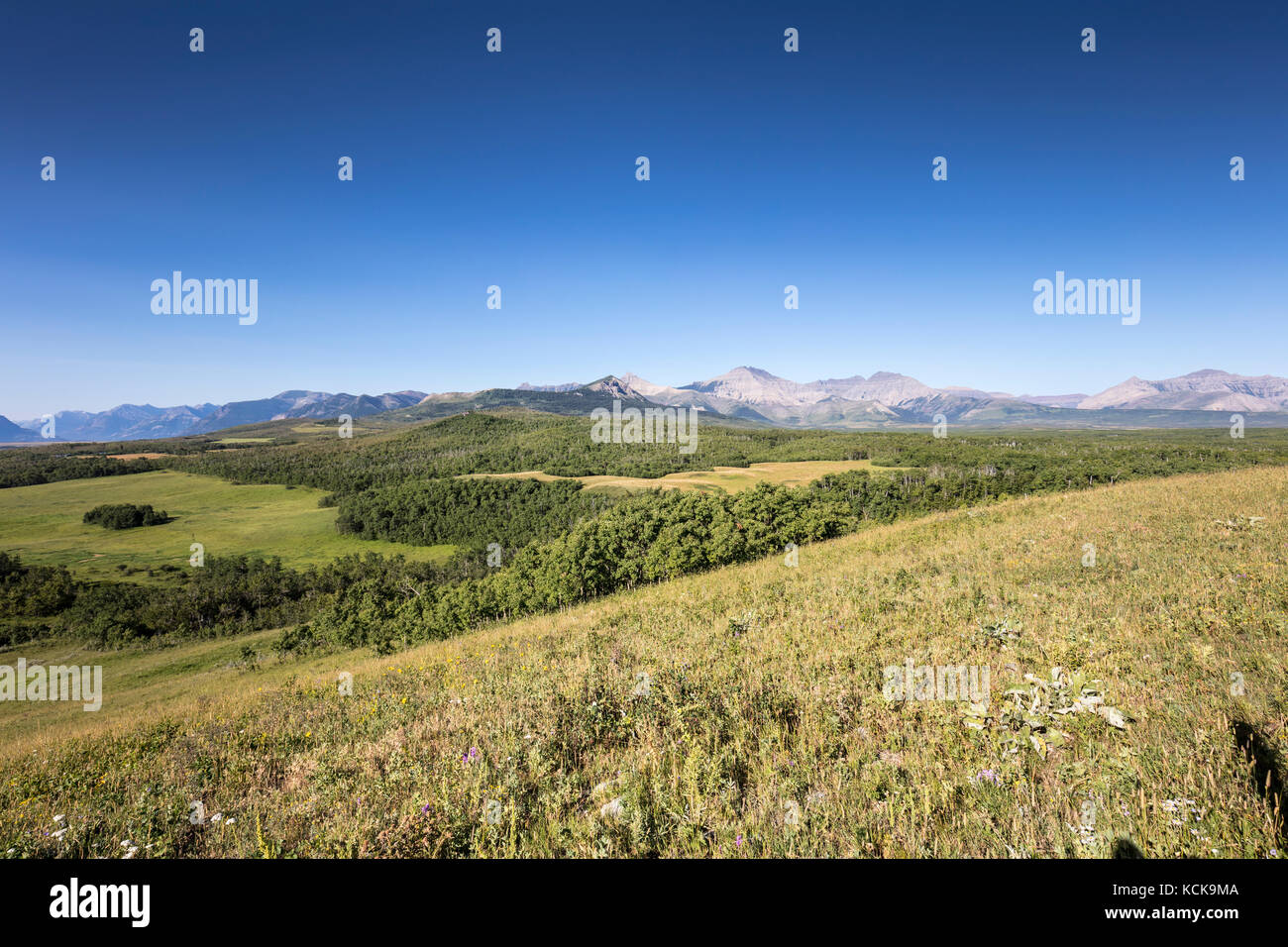 Pine Ridge lookout over the mountains in Waterton Lakes National Park, Alberta, Canada - 'where the mountains - Stock Image