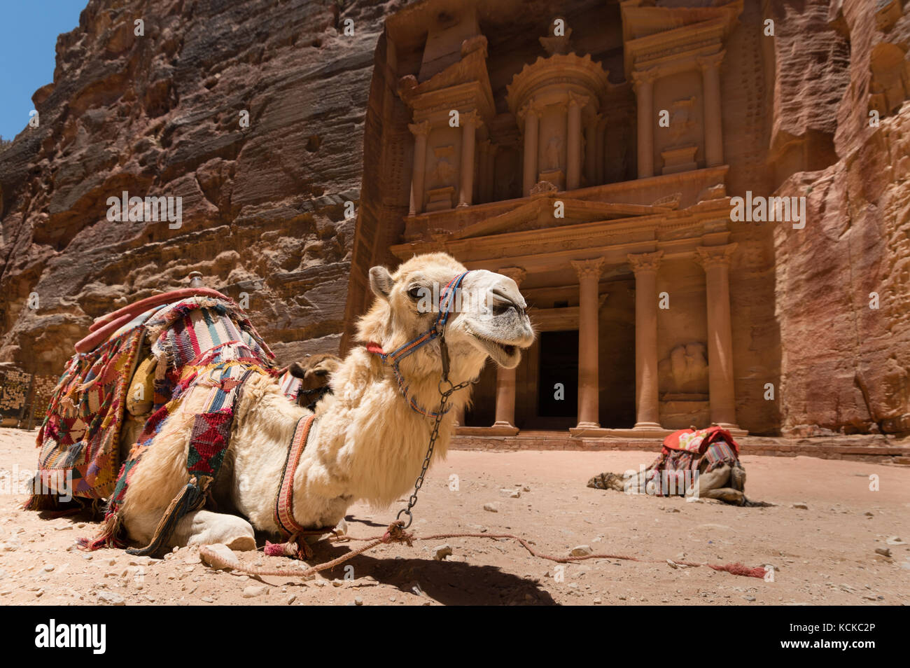 Two camels, used by local guides for tourists entertainment and transport, crouch in sand in front of the Treasury, - Stock Image