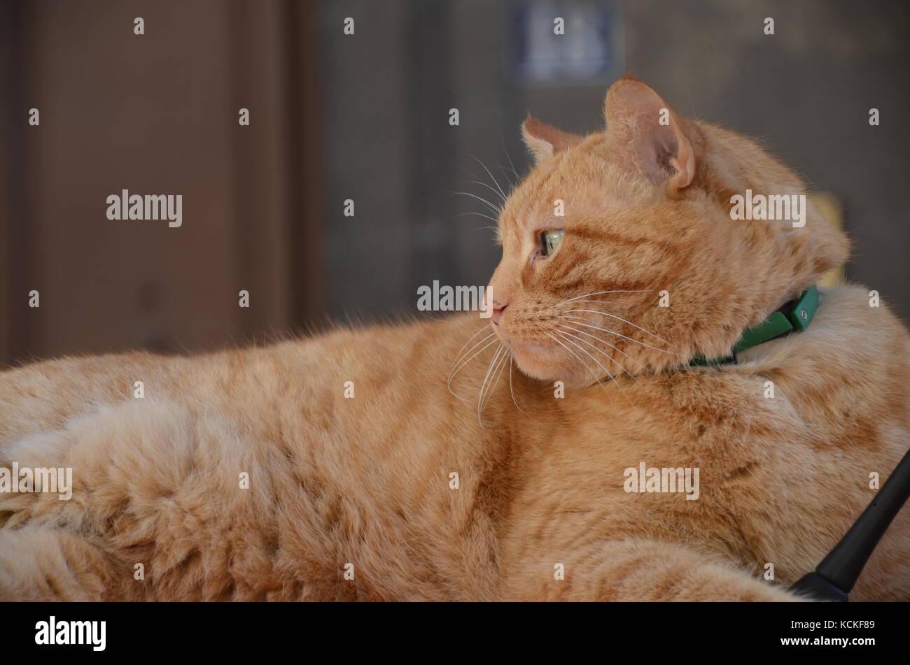 Sassy Cat Looking Away - Stock Image
