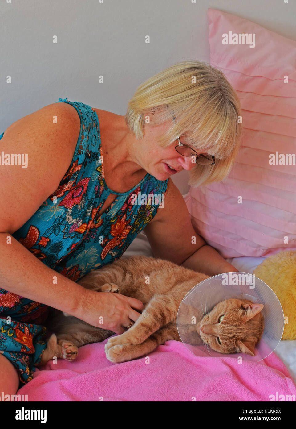 Caring for injured cat - Stock Image