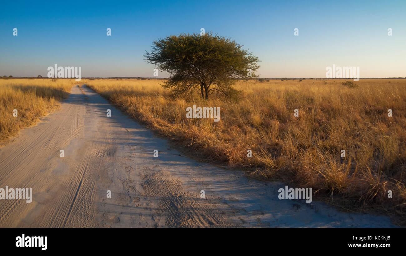 Central Kalahari Game Reserve, Botswana - Stock Image