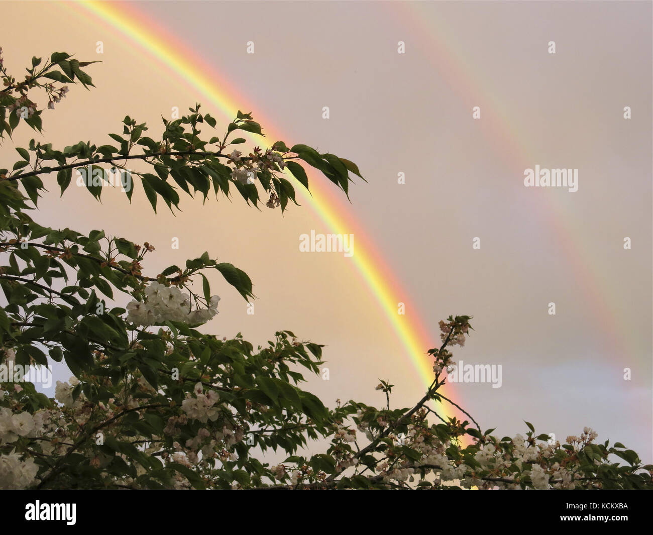 Double rainbow during an evening spring shower, showing the inverted colours of the second bow, blue on the outside - Stock Image