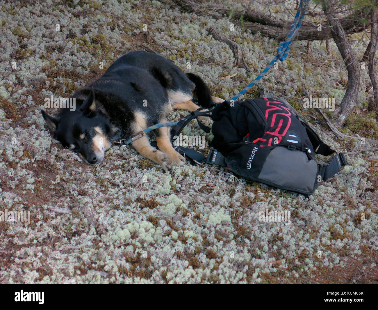 Spectator's dog sleeping while its owner watches the first staging of an Enduro World Series mountain bike racing Stock Photo